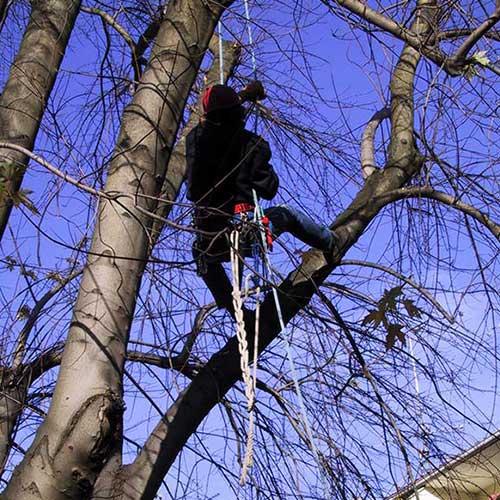 Pflegearbeiten Baumschnitt